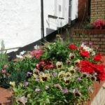 Ilfracombe in Bloom on VisitIlfracombes