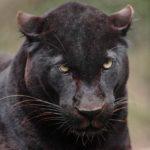 Exmoor Zoo on Visit Ilfracombe