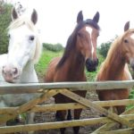 Woolacombe Riding Stable at visit ilfracombe