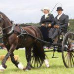 North Devon Show on Visit Ilfracombe